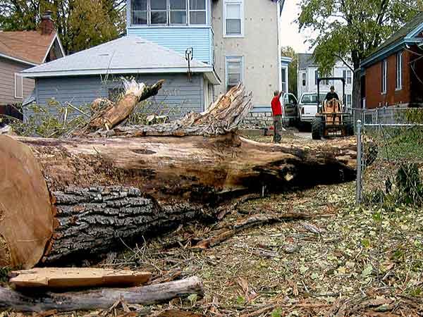 Terstriep expert dangerous tree removal