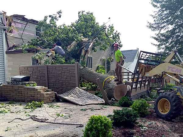 Terstriep provides emergency tree service