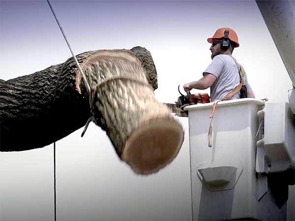 Terstriep expert tree removal